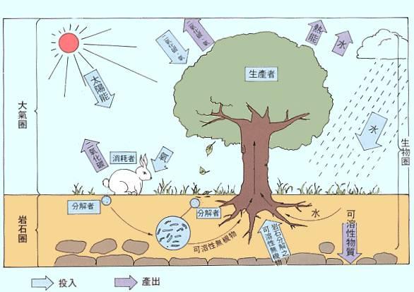 生态系统 ecosystem
