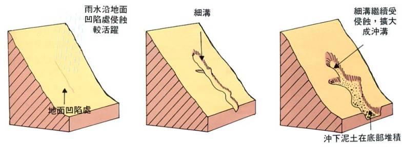 薄荷横切面显微结构详图